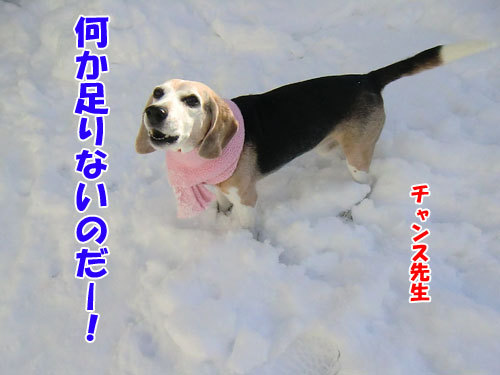 チャンスとティアラ+ココ-20121216-1-500.jpg