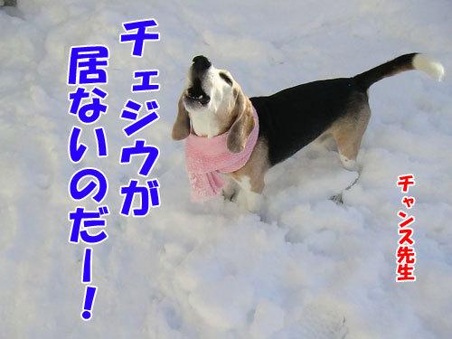チャンスとティアラ+ココ-20121216-2-500.jpg