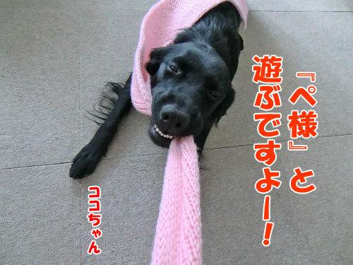 チャンスとティアラ+ココ-20121216-5-500.jpg