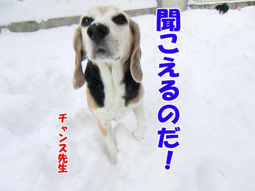チャンスとティアラ+ココ-20121217-1-500.jpg