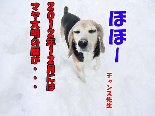 チャンスとティアラ+ココ-20121217-2-500.jpg