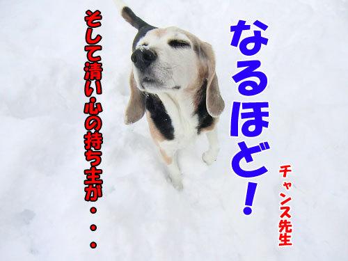 チャンスとティアラ+ココ-20121217-3-500.jpg