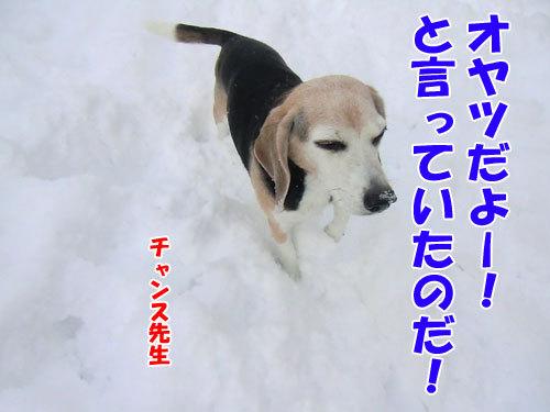 チャンスとティアラ+ココ-20121217-4-500.jpg