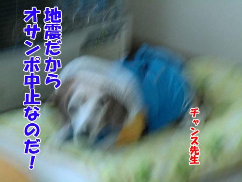 チャンスとティアラ+ココ-20121218-2-500.jpg