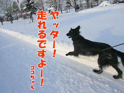 チャンスとティアラ+ココ-20121218-4-500.jpg
