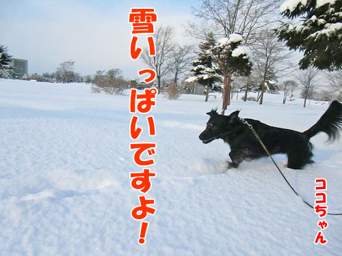 チャンスとティアラ+ココ-20121218-5-500.jpg