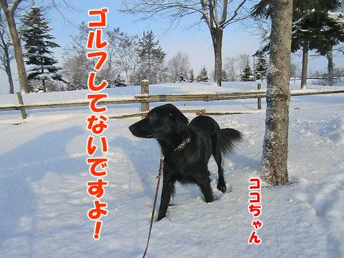 チャンスとティアラ+ココ-20121218-6-500.jpg