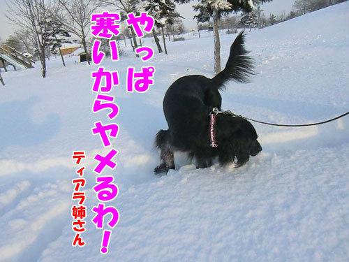 チャンスとティアラ+ココ-20121218-8-500.jpg