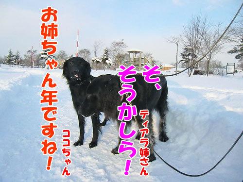 チャンスとティアラ+ココ-20121218-9-500.jpg