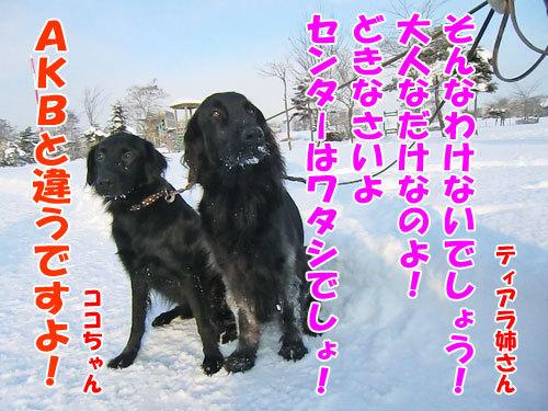 チャンスとティアラ+ココ-20121218-10-500.jpg