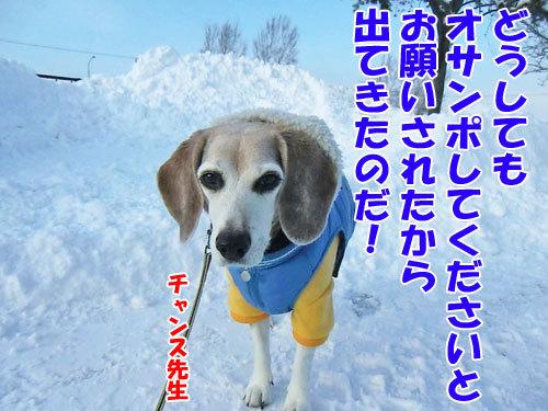 チャンスとティアラ+ココ-20121218-11-500.jpg
