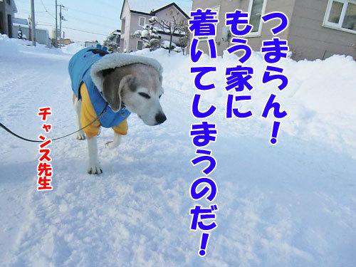 チャンスとティアラ+ココ-20121218-13-500.jpg