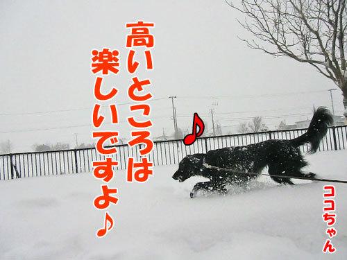 チャンスとティアラ+ココ-20121219-3-500.jpg