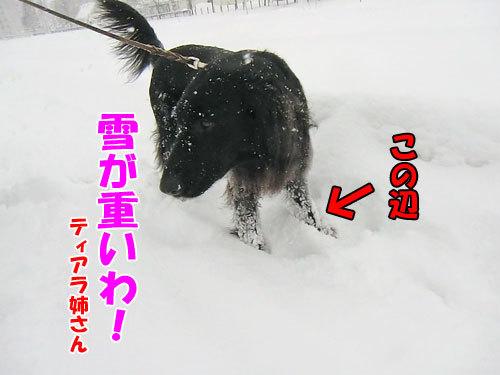 チャンスとティアラ+ココ-20121219-5-500.jpg