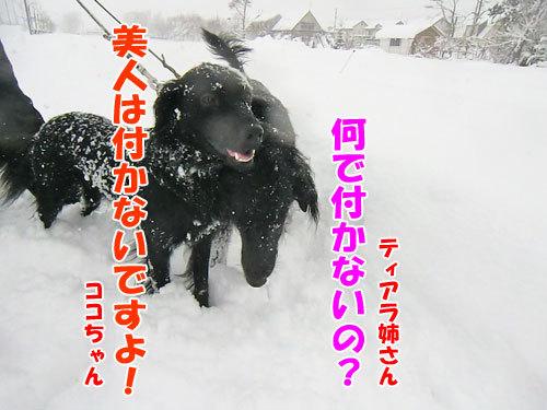 チャンスとティアラ+ココ-20121219-6-500.jpg