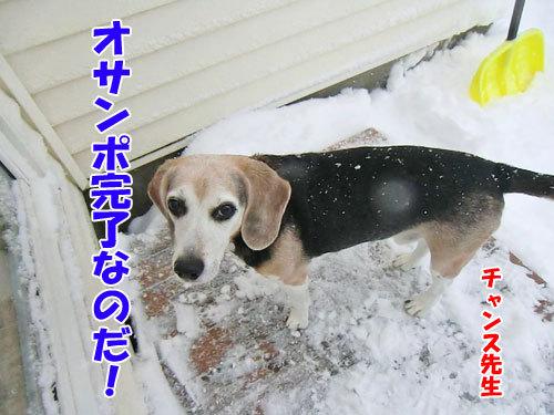 チャンスとティアラ+ココ-20121219-8-500.jpg