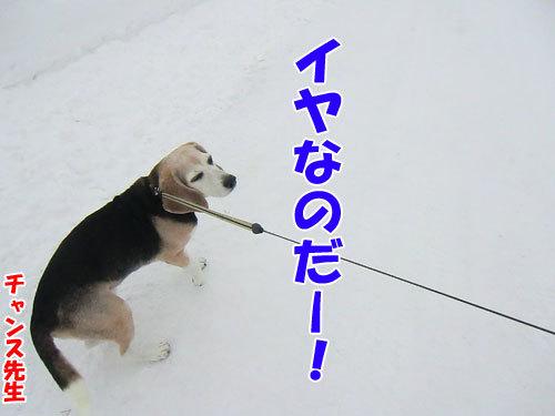 チャンスとティアラ+ココ-20121220-6-500.jpg
