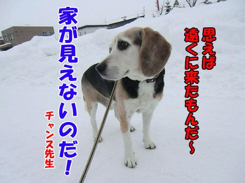 チャンスとティアラ+ココ-20121220-7-500.jpg