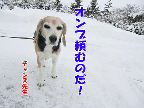 チャンスとティアラ+ココ-20121220-9-500.jpg