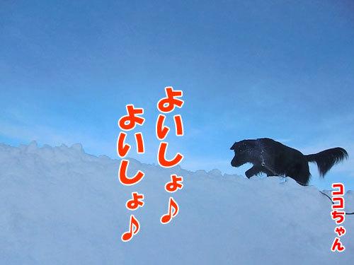 チャンスとティアラ+ココ-20121221-2-500.jpg