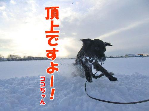 チャンスとティアラ+ココ-20121221-3-500.jpg