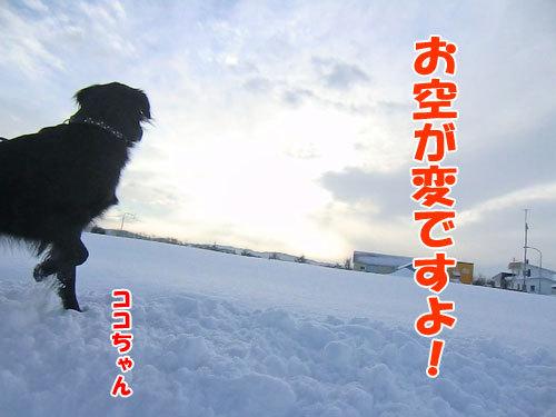 チャンスとティアラ+ココ-20121221-4-500.jpg