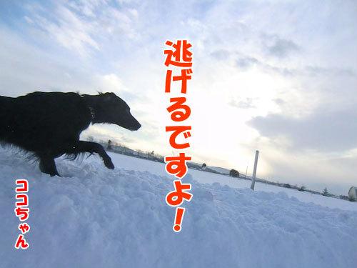 チャンスとティアラ+ココ-20121221-6-500.jpg
