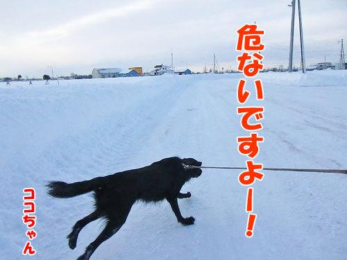 チャンスとティアラ+ココ-20121221-7-500.jpg