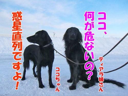 チャンスとティアラ+ココ-20121221-8-500.jpg