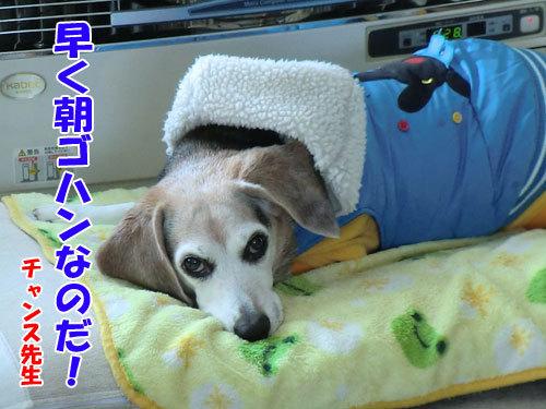 チャンスとティアラ+ココ-20121221-9-500.jpg