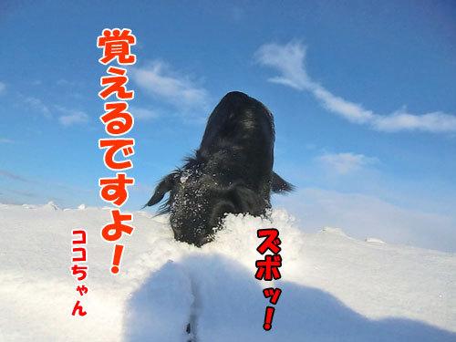 チャンスとティアラ+ココ-20121222-6-500.jpg
