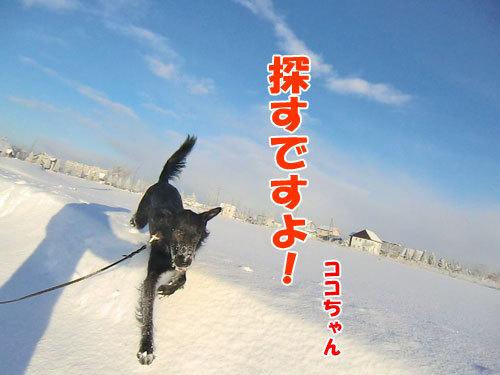 チャンスとティアラ+ココ-20121222-7-500.jpg