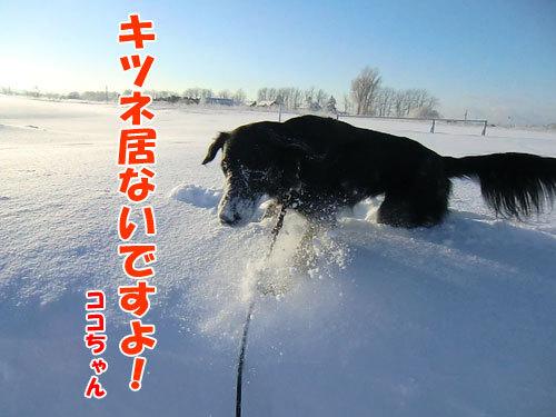 チャンスとティアラ+ココ-20121222-8-500.jpg
