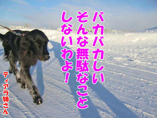 チャンスとティアラ+ココ-20121222-9-500.jpg