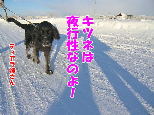 チャンスとティアラ+ココ-20121222-10-500.jpg