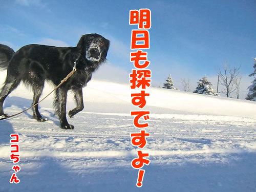 チャンスとティアラ+ココ-20121222-11-500.jpg
