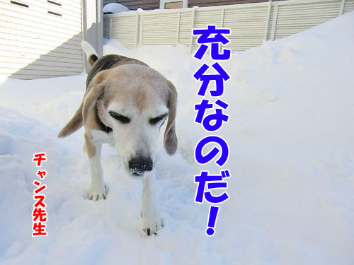 チャンスとティアラ+ココ-20121222-12-500.jpg