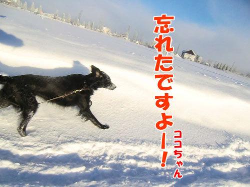 チャンスとティアラ+ココ-20121223-1-500.jpg