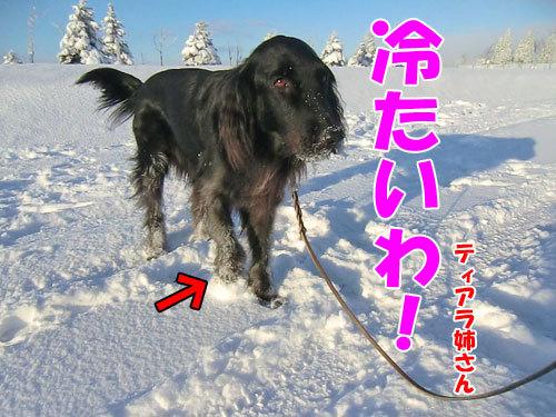チャンスとティアラ+ココ-20121223-3-500.jpg