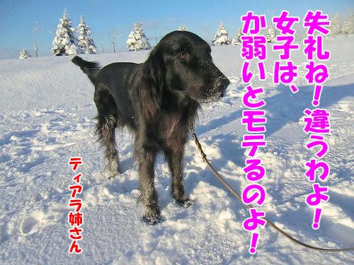 チャンスとティアラ+ココ-20121223-4-500.jpg