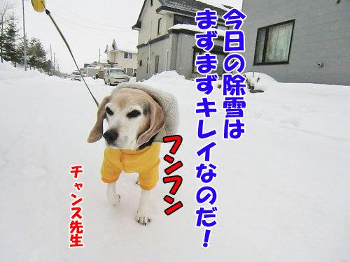チャンスとティアラ+ココ-20121224-4-500.jpg