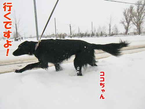 チャンスとティアラ+ココ-20121224-5-500.jpg