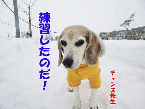 チャンスとティアラ+ココ-20121224-6-500.jpg