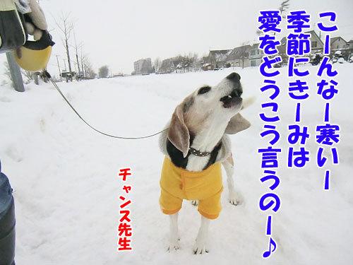 チャンスとティアラ+ココ-20121224-7-500.jpg