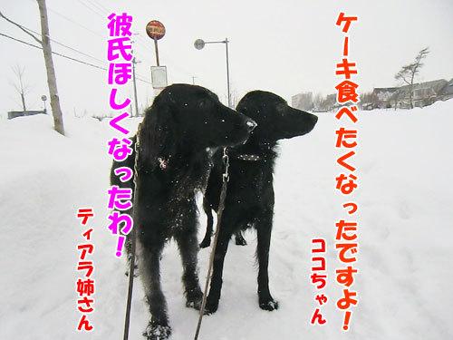 チャンスとティアラ+ココ-20121224-9-500.jpg