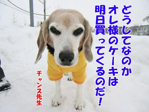 チャンスとティアラ+ココ-20121224-10-500.jpg