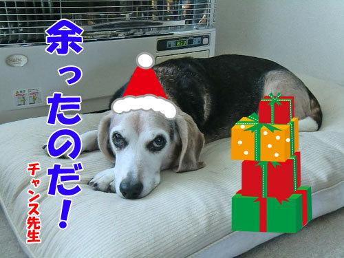 チャンスとティアラ+ココ-20121225-3-500.jpg