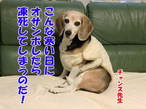チャンスとティアラ+ココ-20121226-1-500.jpg