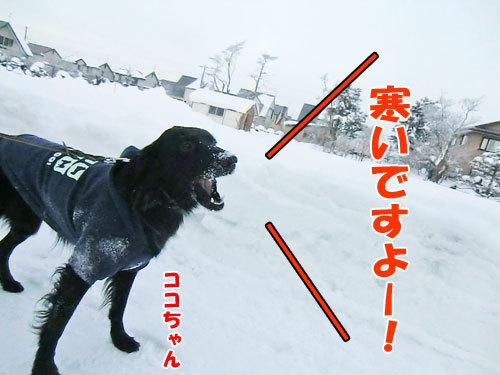 チャンスとティアラ+ココ-20121226-2-500.jpg