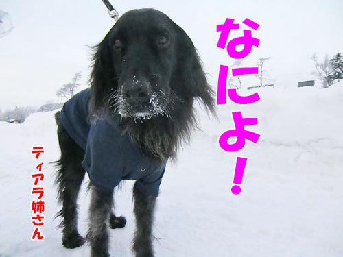 チャンスとティアラ+ココ-20121226-3-500.jpg
